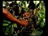 Производство кофе OPIUM