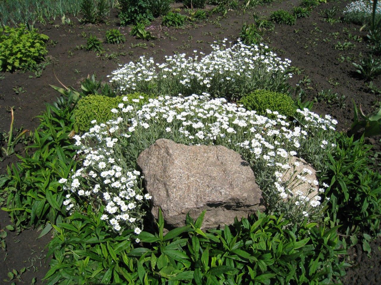 Розсада садових рослинок. ExjoBQdi5gY