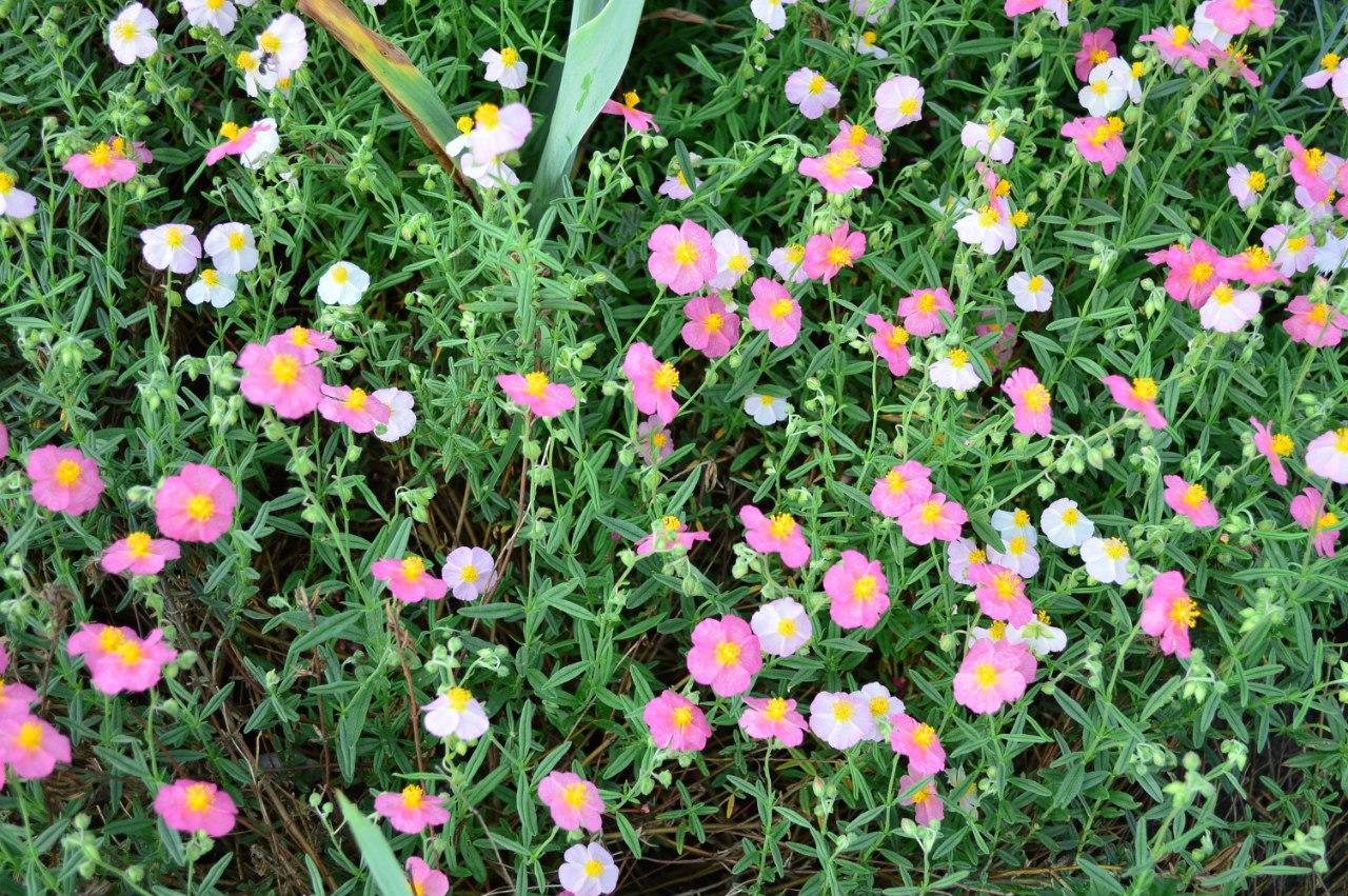 Розсада садових рослинок. 9tK5YpSAvtI
