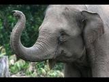 Elephant - My animal friends - Animals Documentary -Kids educational Videos