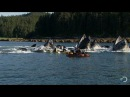 Горбатые киты пугают каякеров Humpback whales startle kayakers