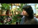 Выбираем комнатные цветы. KerchNet TV