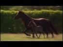 Про лошадь