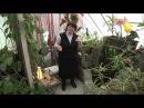 Зимний сад своими руками Проект Равновесие FORUMHOUSE