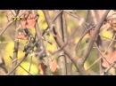 Ирга (6 соток) сад, огород, дача