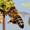 Здоровье с помощью пчёл!