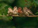 Звуки природы под красивую музыку - Шикарная инструментальная музыка под звуки природы Birds Singing