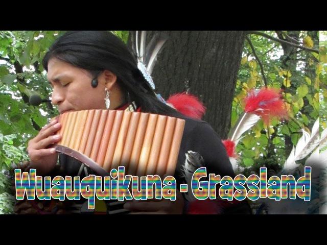 Wuauquikuna - Grassland