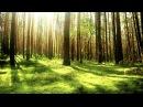 Звуки природы. Пение птиц. Лес. Для реабилитации психофизиологического состояния организма