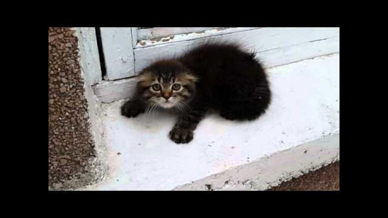 Very angry kitten Очень злой котенок