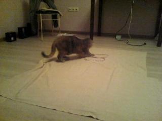 маленький ролик про кота і тканину