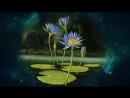 Цветы , космос и релаксация