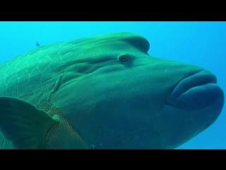 Красное море Египет. Подводный мир.