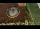 Все О Домашних Животных Почему Крысы Дамбо