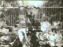 Капустная фея или рождение детей La fée aux choux ou la naissance des enfants 1900