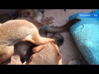 Жители Тбилиси спасли от смерти маленьких бельчат