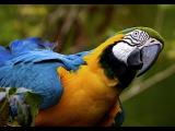 Очень Интересный Документальный Фильм - Австралия Страна Попугаев