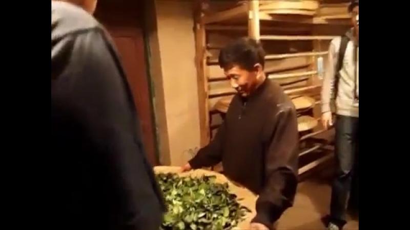 Традиционный способ производства Утёсных чаёв