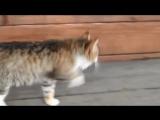 кошка бежит как лошадь
