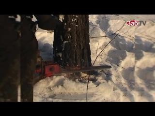 КРЫМ-НАШ, СИБИРЬ-ВАШ ! Как отдают китайцам 2 млн. га русской земли в Сиби
