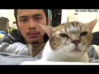 Кот качает головой в такт хозяину и песне / Cat bobs head to Drake's Hotline Bling