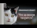 """Говорящая кошка - монолог """"Что за окном творится"""""""