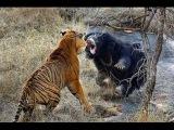 Хищники планеты.Тайная жизнь На виду. National Geographic
