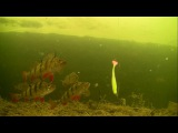Fishing in canal best lures for perch, bass, zander, trout, pike. Attacks action. Рыбалка окунь.