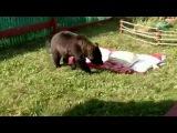 В Красноярском крае из-за неурожая ягод и орехов медведи все чаще подходят к человеческому жилью - Первый канал