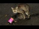 Секс животных 2015 часть 46 III Секс у котов как у людей III