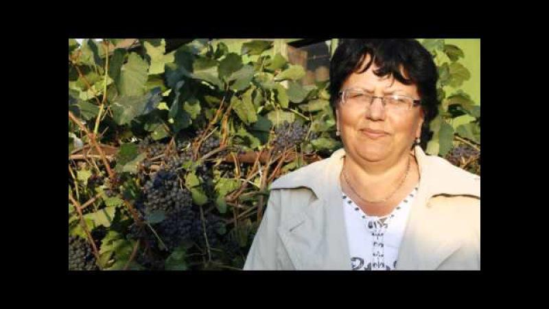 Виноград в Северных условиях это реально! — Сады Урала. Видео-блог