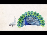 How did feathers evolve - Carl Zimmer
