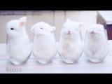 Baby Bunnies In Cups