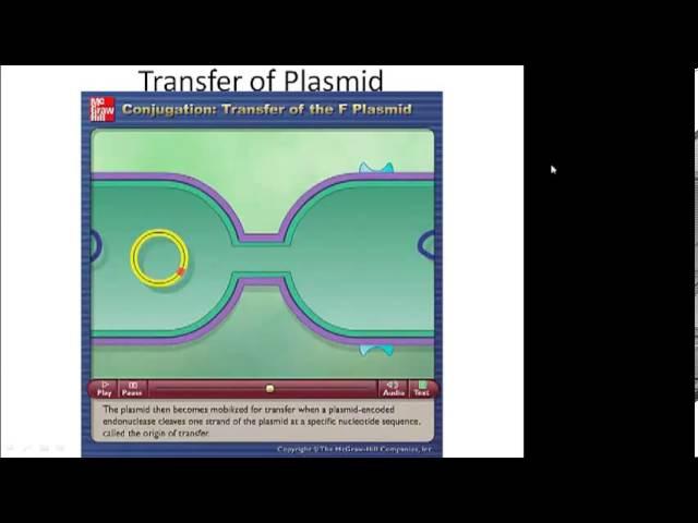 Prokaryotic Genetics Part 4 Transposons Plasmids and Conjugation