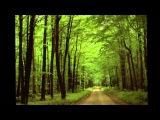 Wilhelm Richard Wagner - Feeling