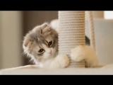 Коты, кошки, котята. ч. 1 Котята поют под музыку баха.  Приколы. Котэ Саратовский