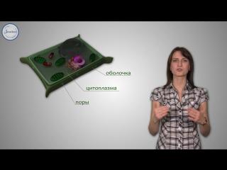 3. Биология 6 кл. Строение растительной клетки