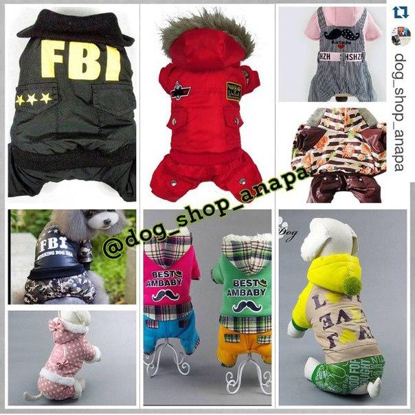 Интернет магазин одежды для собак ZN4dmqOwSLc