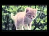 EvGeniY BeliY feat INCity - Подари мне рай (клип в исполнении котят) очень красиво =