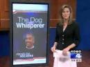 Are the Dog Whisperer's methods harmful ?