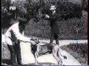 Военная школа служебного собаководства Е.И.В. Государя Императора 1900-е годы