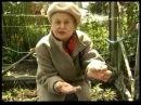 Лилии как сохранить луковицы