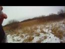 Охота с лайками на кабана Аякс и Карат