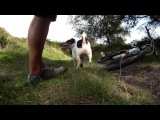 Mountain Biking with my Jack Russell, Poppy