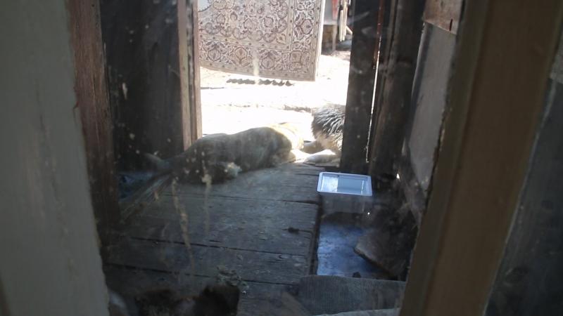 Лопоушек и другие собаки и кошки на передержке 22 мая 2015г.