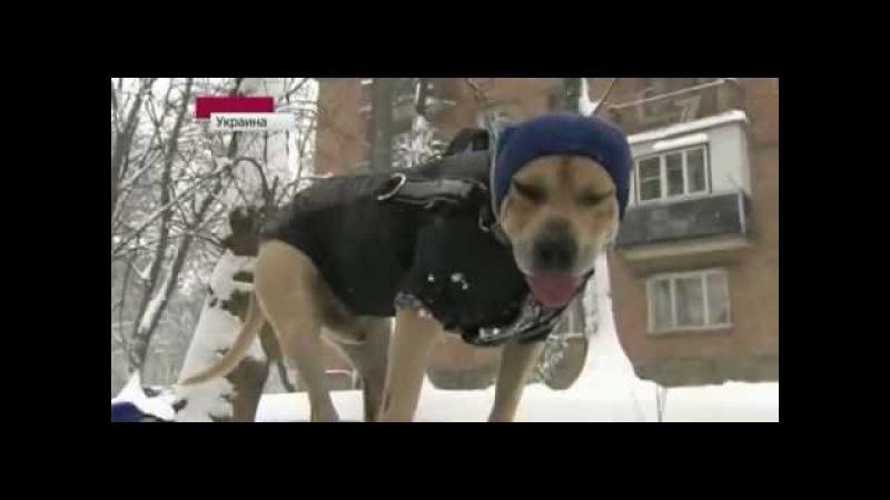 Украинский пес-паркурщик