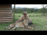 Robert Eklund records the purring cheetah Caine at the Dell Cheetah Centre, Parys, South Africa