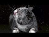 Коты стряхивают воду