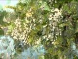 Валерий Агафонов. Белой акации гроздья душистые.