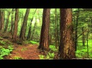 3 HOURS WOODLAND Birds Forest RELAXATION Soothing Forest Birds Singing